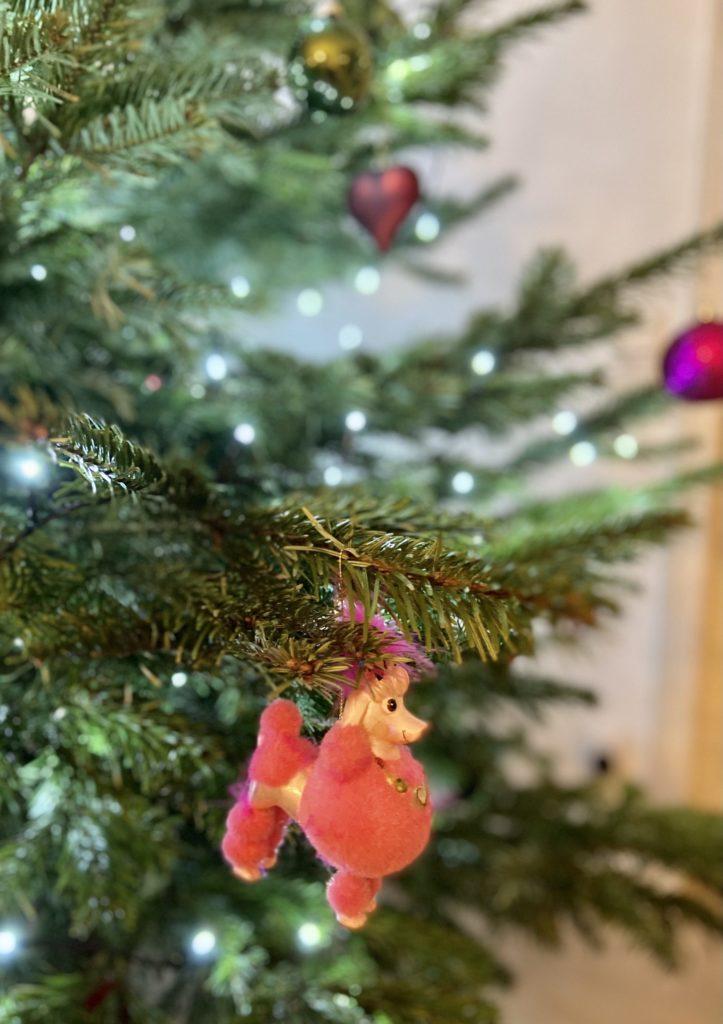 Christmas_dog_female_Weihnachten